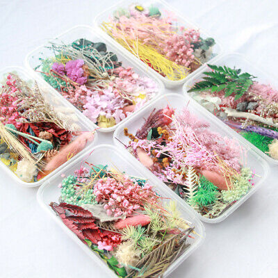1Box Real Dried Leaf Flowers Plant Herbarium Craft Jewelry Making Casting Gift//