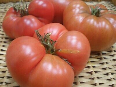 Tomato seeds Piccadilly Qty 25 Fresh seeds 2019