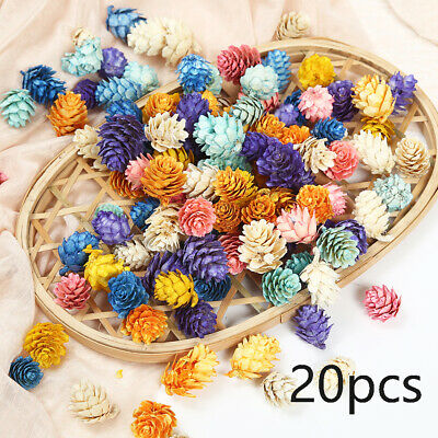 20Pcs/lot Colorful Pine Cone Dried Flowers DIY Craft Wreath Gift Scrapbooking