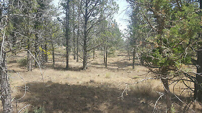 Northern California Lot In Modoc Recreational Estates