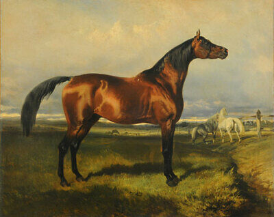 ZOPT109 high quality hand painted impetuous horse ART OIL PAINTING ON CANVAS