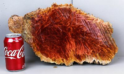 Red Mallee Burl Cap, High Figured Exotic Wood Turning Blank   RML1629