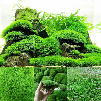 Live Aquarium Moss Mesh Green Plants Fish Tank Landscape Home Garden Decor