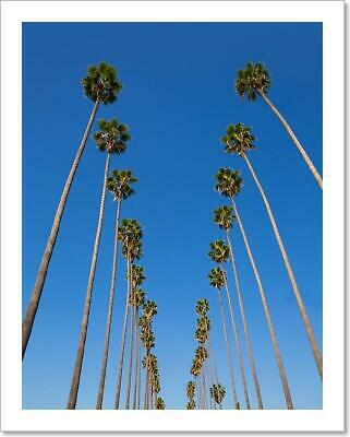 La Los Angeles Palm Trees In Art/Canvas Print. Poster, Wall Art, Home Decor - C