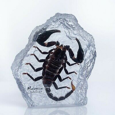 Decorative Real Scorpion Insect inside Blue Crystal - taxidermy Collectible