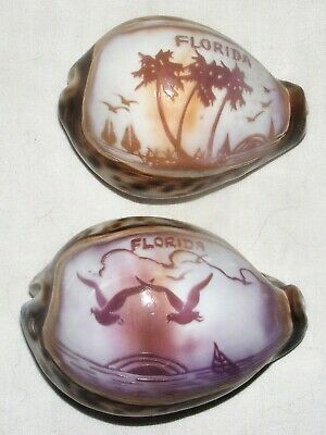 2 Vintage Hand Carved Cowrie Shell Florida Souvenirs