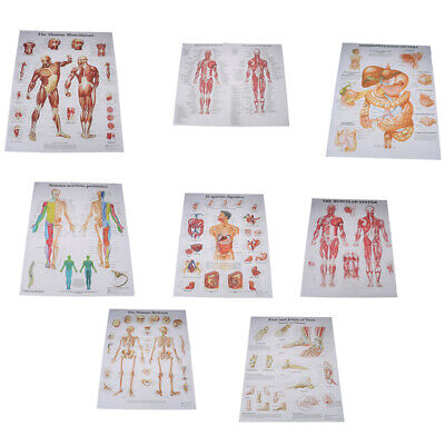 Human Anatomy Muscles System Poster Print Body Map Silk PaiOSE