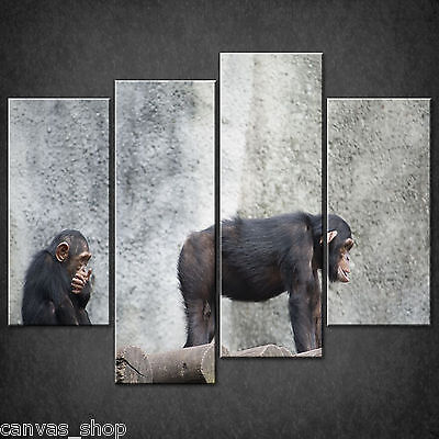 Two Funny Chimpanzees Apes Cascade Canvas Print Wall Art Picture Ready To Hang