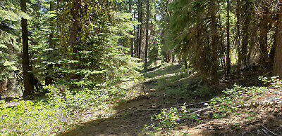 .93 Acres In California Pines - Foreclosure