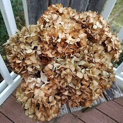 7 Dried Hydrangea Flowers Rustic Primi Khaki Brown Green Bluish Hues DIY Bouquet
