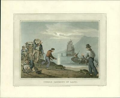 1814 Field Sports 1st Edition Antique Aquatint  'TURTLE CATCHING LAND' (80)