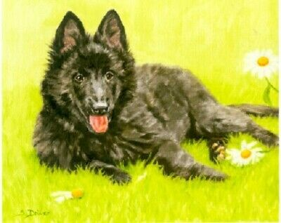 Belgian Shepherd Groenendahl Limited Edition Puppy Art Print What's Up? LAST ONE