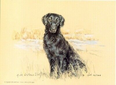 Flat Coated Retriever Limited Edition Print by UK Artist Gill Evans