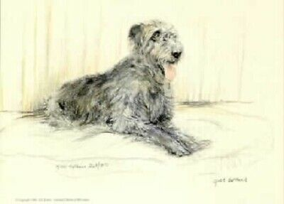 Irish Wolfhound Limited Edition Print by UK Artist Gill Evans