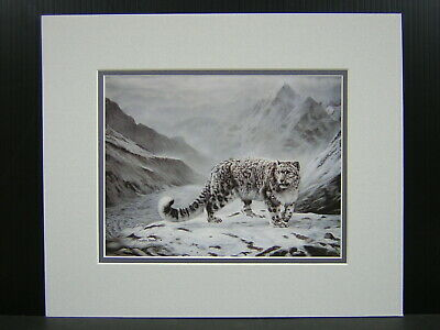 Gray Ghost by Charles Frace Snow Leopard Print 35x26