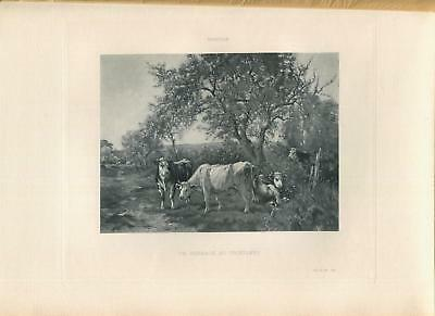 Antique Cows Bull Steer Grazing Pasture Meadow Trees Nature Grass Path Art Print