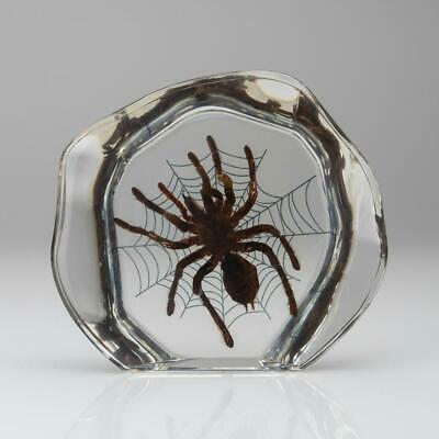 Tarantula Spider with Web in Lucite