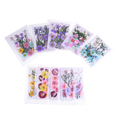 Pressed Flower Mixed Organic Natural Dried Flowers DIY Art Floral Decors gift EH