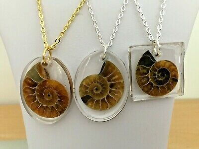 "Clear Resin & Ammonite Fossil Pendants on Silver or Gold Plated 20"" Chains"