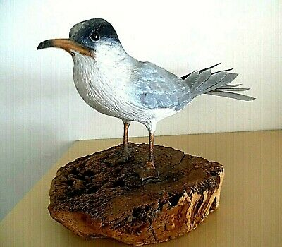 """Hand-Carved Bird Hand-Painted """"Least Tern""""  OOAK Realistic Signed"""