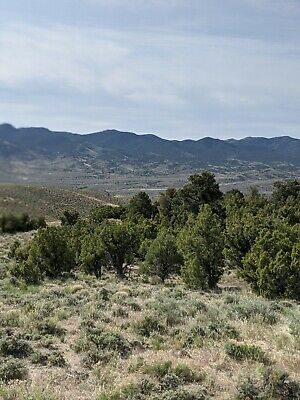 10 Acres of Nevada Beautiful Treed Land in Elko County w/ Financing at $150/mo!