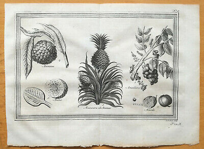 BELLIN: 8 Original Prints Botany Indonesia East India Pineapple Spices <1753>