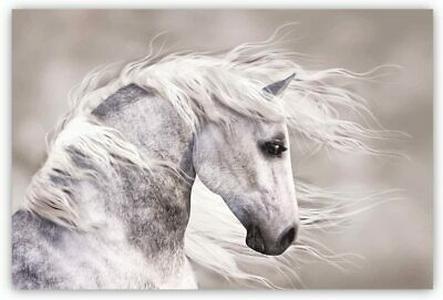 Studio 500 Canvas~The White Stallion 48x32, READY TO HANG! MADE IN THE USA!