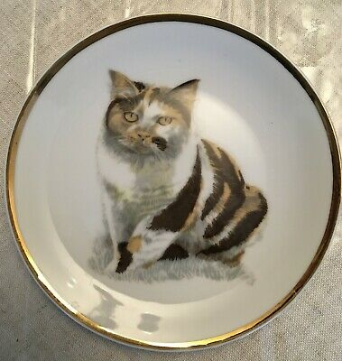 Chubby Calico Cat Plate, JAPAN