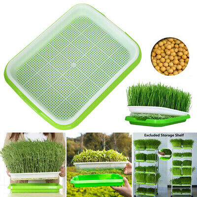 FREE SEEDS LARGE 3 TRAYS SPROUTER GERMINATION 3 LEVEL