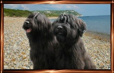 Briard A6 Dog Notelets No 4 By Starprint