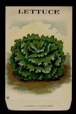 1910's LETTUCE LITHO SEED PACKET ~L@@K~ MUST SEE-WOW!!!