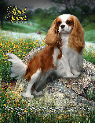 HUGE DISCOUNT! Fall 07 Royal Spaniels Magazine ~ Cavalier King Charles ~ PHOTOS!