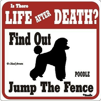 Poodle Funny Warning Dog Sign - Dif Signs Breeds Avail