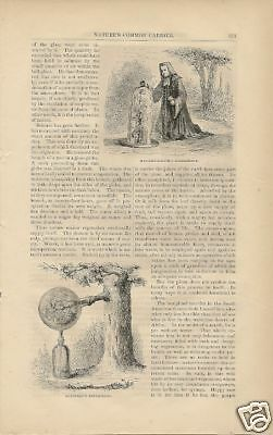 1870 Transpiration Circulation in Nature article