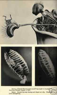 Carnivorous Plants Venus Fly Trap 5 Old Books on CD ROM