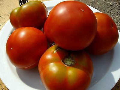 50 graines - TOMATE Marmande - Charnue 150 gr - TOM-0010