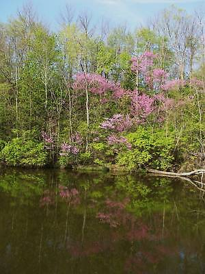 Lake View Spring Art Photography Digital Picture Portrait Dentist Doctor Office