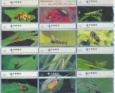 Taiwan - Insectos - Insects - 201