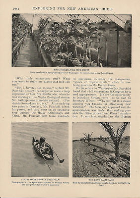 1906 New American Crops Agriculture vintage article