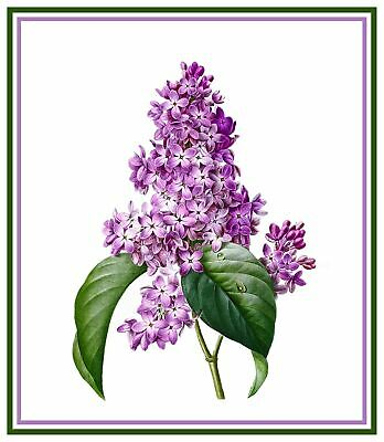 Redoute Flower Lilac  Counted Cross Stitch Chart Pattern