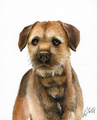 Original Oil DOG Portrait Painting BORDER TERRIER Art Artwork Puppy Signed
