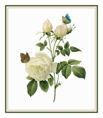 Redoute Flower Illustration of Tea Rose Illustration Count Cross Stitch  Pattern