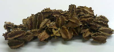 800 grm MINI ARJUN,NATURAL<MAKE YOUR OWN BOTANICAL POT POURRI>BUSINESS or HOME<<