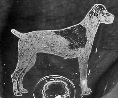 German Shorthair Pointer Dog Etched Glasses CHOOSE your glass style