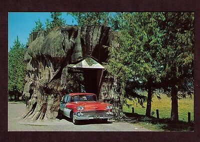 Vintage Postcard, Giant Drive-Through Western Red Cedar Stump, Hwy 99, WA
