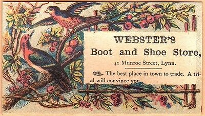 Small Victorian Trade Card-Webster's Boot & Shoe Store-Lynn, MA-Birds & Fruit