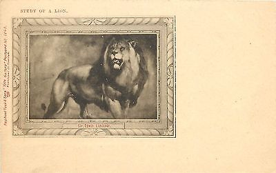 Vintage Tuck's Lithographed Postcard, Study of a Lion, Sir Edwin Landseer