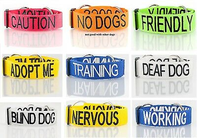 Friendly Dog Leashes Or Collars