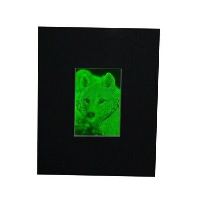 3D Arctic Wolf 2-Channel Hologram Picture (MATTED) Collectible Photopolymer Type