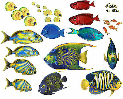 Walls of the Wild Tropical Fish Combo Pack BIG Reg. $155.00!